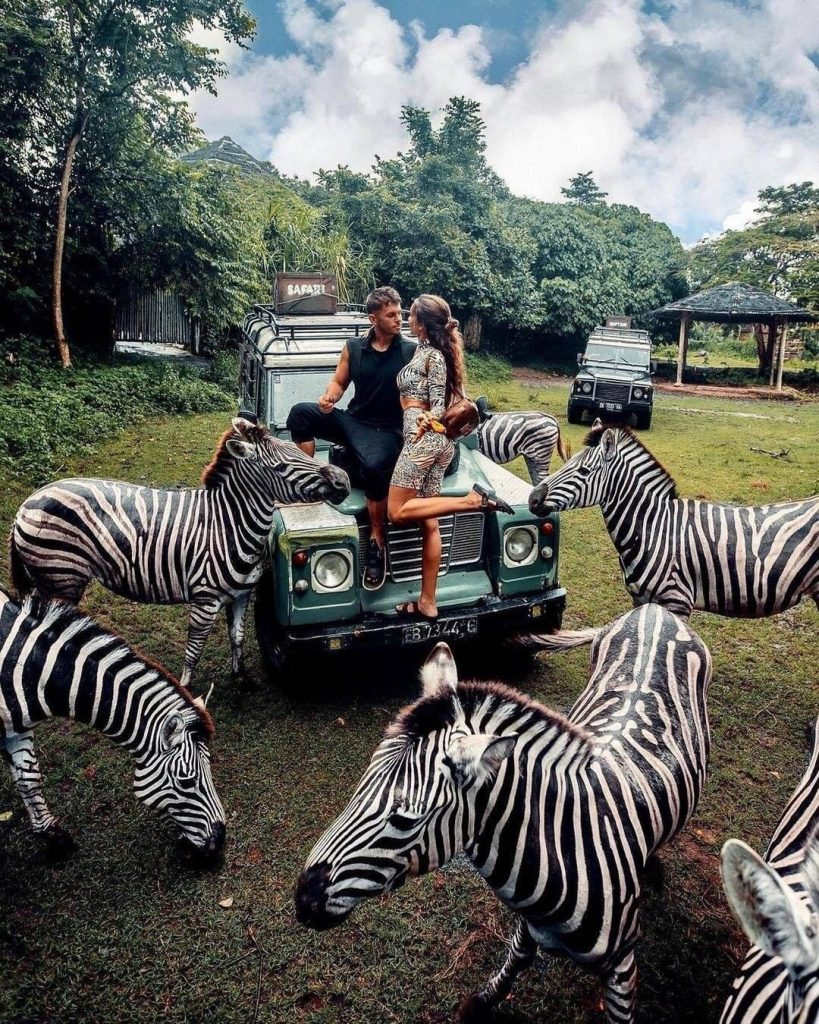 Meet zebras at Bali Safari Park is one of the best places to visit in Bali