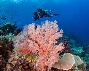 raja ampat is tourist destination in west papua